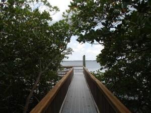 Bay Tree on Hutchinson Island