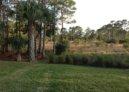 Duckwood in Stuart FL